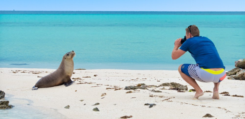 Abrolhos Islands sea lion