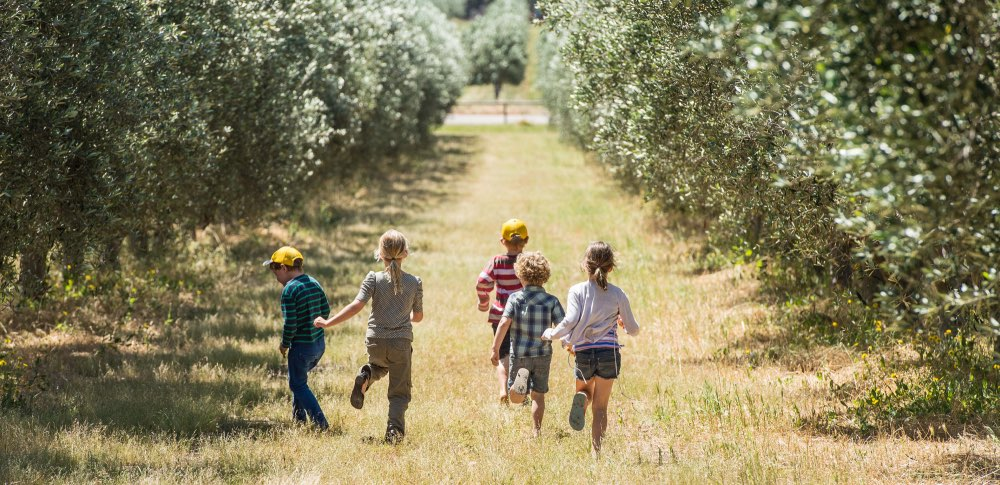 Silverdale Olive Orchard